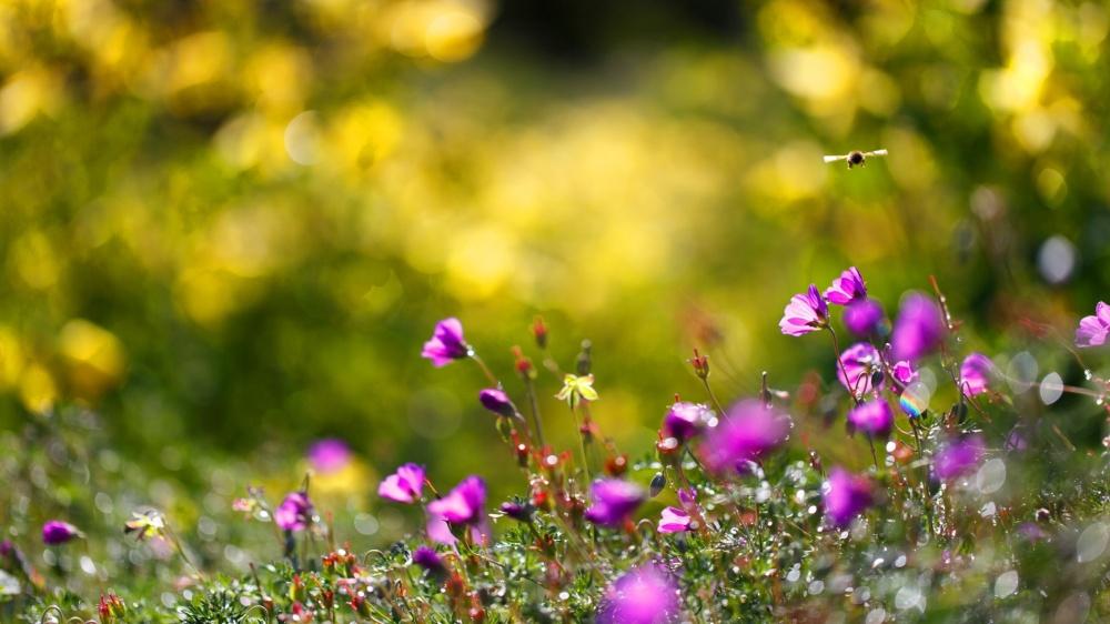 summer-flowers-bees-1