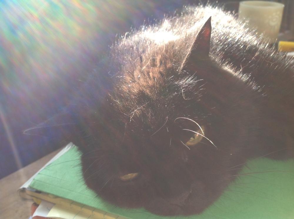 Sissy-boo in sunshine-3