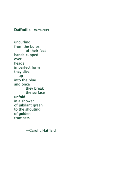 Daffodils March 2019-green