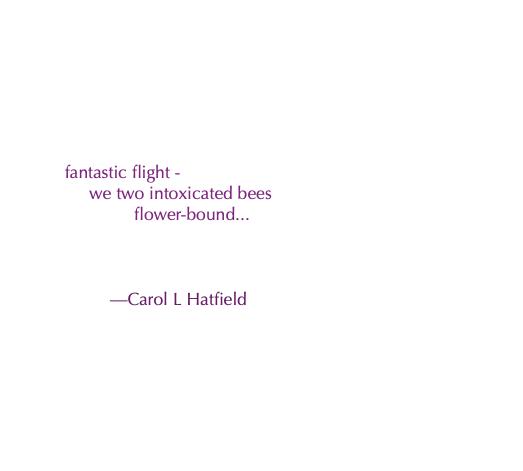 fantastic flight - haiku