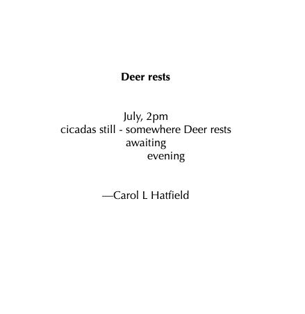 HAIKU - Deer rests